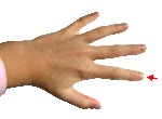 1200px-Hand_-_Index_finger