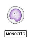 Monocito