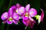 one flowery boi