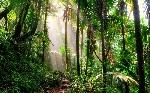 el-yunque-national-rainforest-tropical-puerto-rico-TROPICALPLANTS0617