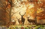 animali_autunno4