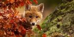 animali_autunno3