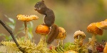 animali_autunno12
