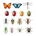 coloured-insects-collection_1053-433
