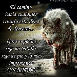 a23c05add3741a896d243f5bf6bbce53--dark-images-wolves