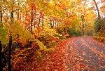 fall-road-1024x692
