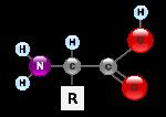 amino acid 1
