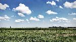 nuvole alice