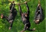 scimmia_albero