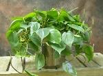 plantas10