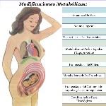 modificaciones-metablicas-y-endocrinas-en-el-embarazo-2-638