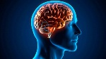 -increible-el-cerebro-humano-es-capaz-de-predecir-el-futuro-3-655x368