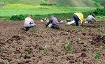 desarrollo-rural-2011-01-16-25554