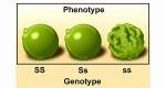 pheno2