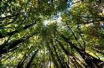 9292023-scena-del-tramonto-nella-foresta-di-conifere