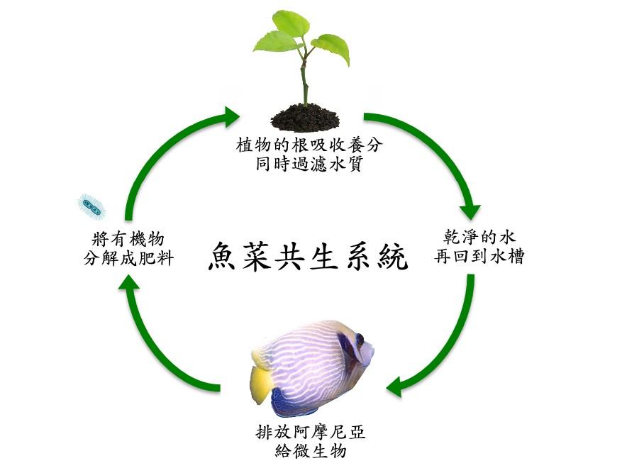 fishgreen