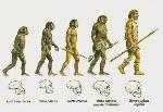 la-evolucion-humana-informacion-600x415