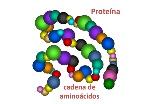 gen_proteina_09_x600