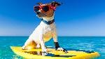 perro-en-vacaciones
