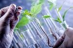 Noticias-2016-Que-es-la-biotecnologia-960x639