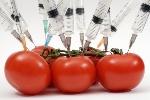 tomates-transgenicos1