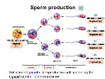 human-sperm-creation-e1479841272796