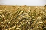 Agricultura-de-secano