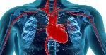 coração humano