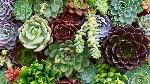 succulents-guide-feat