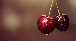 Cherries-Featured-Image
