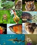 b0461131e230871c55982b20c58fe85c--circa-regno-animale