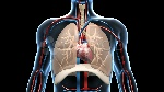 respiratory-cardiovascular-system-depicted-blood-footage-000995131_prevstill