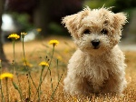 Pets-animals-and-pets-22054588-1024-768