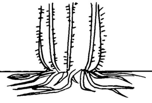 root01