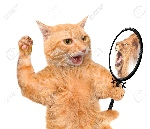 46006438-cat-looking-into-the-mirror-and-seeing-a-reflection-of-a-lion-