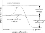 reaction path
