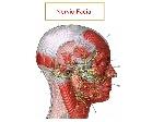 Nervio+Facial
