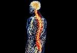 medula-espinal1