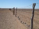 rabbit-proof-fence-121