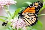 171114-monarch-630x422
