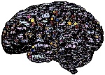 brain-744180_1280