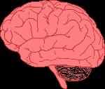 brain-155656_960_720