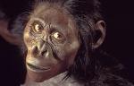 scimmia antropomorfa 1