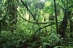 fundo-da-selva1