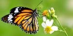 mariposa-macro-invertebrados-min-e1507320140812
