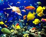 img_la_contaminacion_acustica_afecta_a_los_peces_121_600