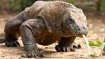todo-los-que-debes-saber-sobre-los-reptiles-2-620x348