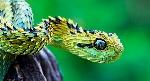 principales-depredadores-de-las-serpientes