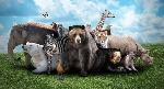animales-salvajes-portada