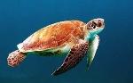 schildpad-symboliek-350